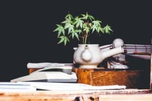 cannabis dispensay office lit marketing agency