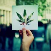 Creative Cannabis Marketing